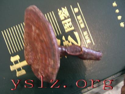 野生灵芝:yslz.org:野生灵芝网,纯粹天然的野生灵芝