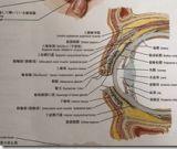 眼部解剖清晰结构图6张