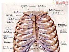 肋软骨采集过程——美莱集团 梁晓健院长