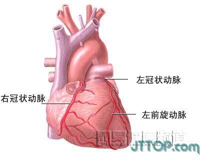 人体各部分的结构解剖图,还不错,点图放大